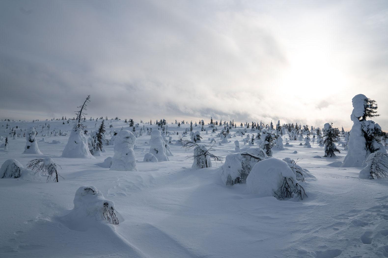 Lapland-410